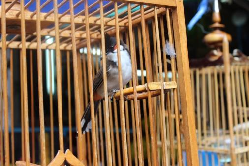 Birds in Trang, Thailand