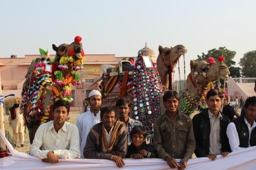 Backdtage at the Bikaner camel festival