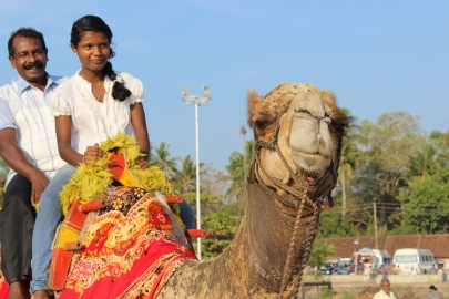 Alleppey Beach, India: Camels Optional