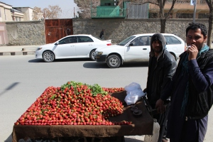 Strawberry Vendors in Kabul, Afghanistan