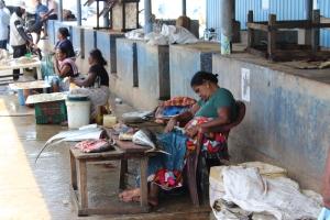 Fish Market in Negombo, Sri Lanka