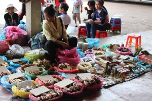 Herbal cures at the bus station in Takhek, Laos