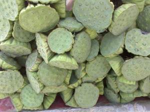 Lotus pods for sale in Lopburi, Thailand