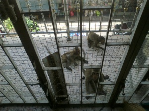 Monkeys at the gates in Lopburi, Thailand...